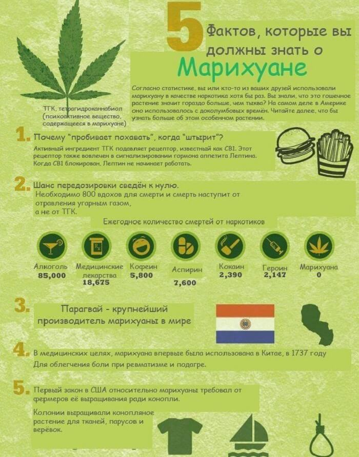 Пять фактов о марихуане