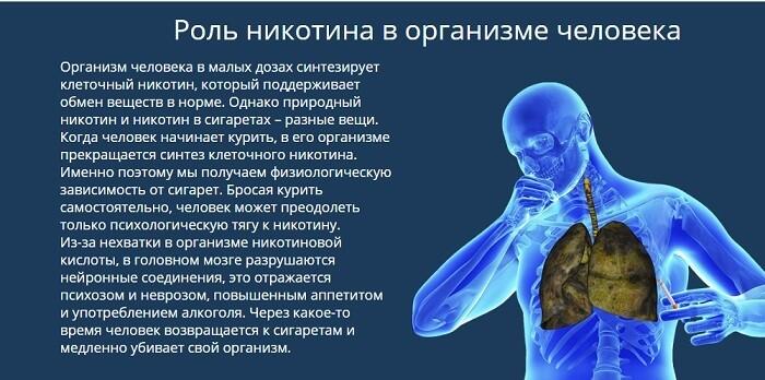 Никотин в организме человека