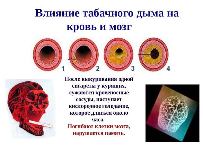Влияние на кровь и мозг