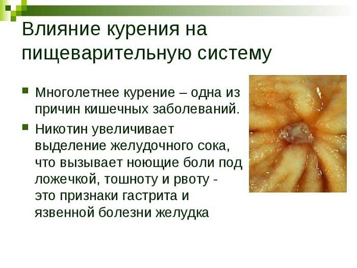 Влияние на пищеварительную систему