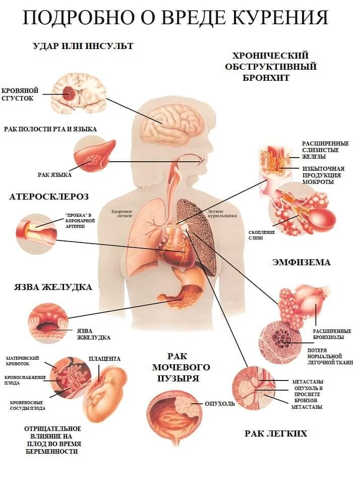 Влияние сигарет на системы организма