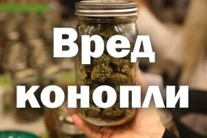 Вред конопли для человека – чем опасна марихуана?